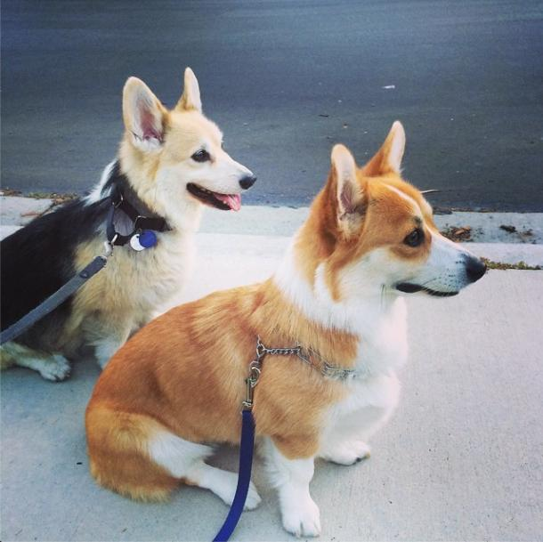 Cooper & Pie on a walk - Featured Dogs