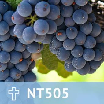 29, NT 505 The Parables of Jesus thumbnail