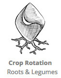 Crop_Rotation_RLC_Roots.jpg