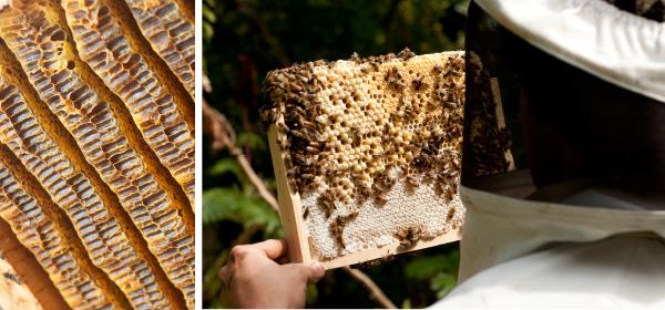 Bee_Banners.jpg