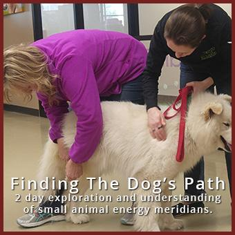Finding the Dog's Path - Jan 15-19, 2018 - Sonoita, AZ thumbnail