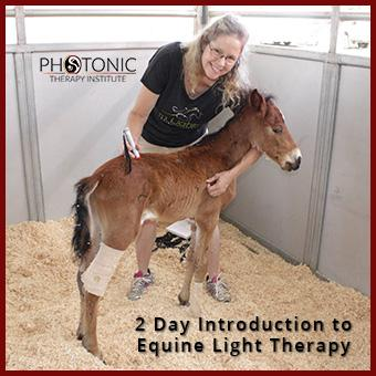 Intro to Equine Light Therapy - 7/21/17 - with Tami Blake thumbnail