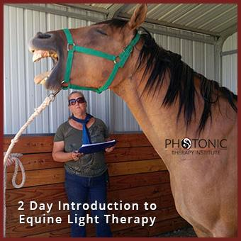 The Photonic Horse - Intro to Equine Light Therapy thumbnail