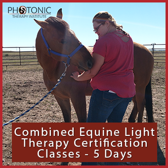 Combined Equine Certification Classes thumbnail