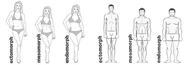 bodytypes.png