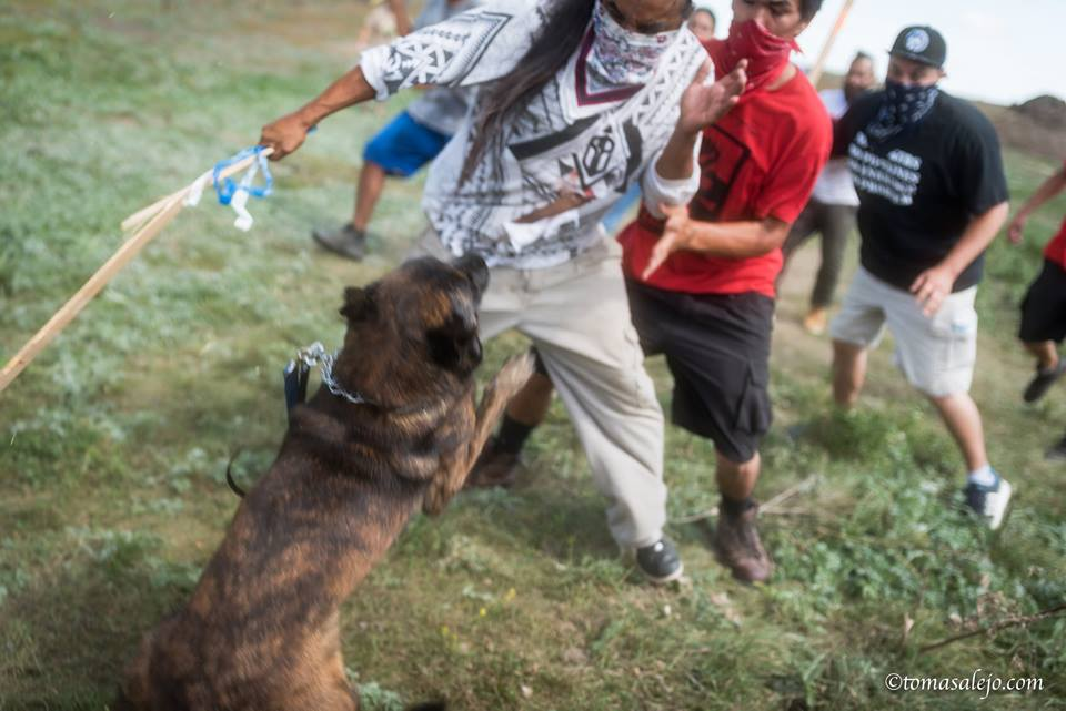 Photo: http://narcosphere.narconews.com/notebook/brenda-norrell/2016/09/native-americans-attacked-vicious-dogs-dakota-access-pipeline