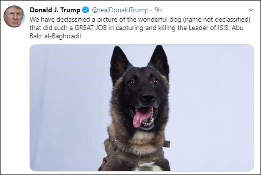 trump tweet hero dog