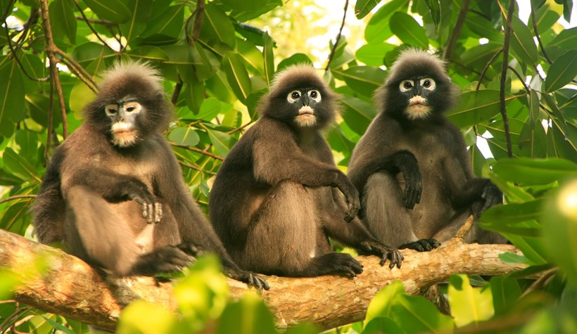 Monkey Monkey How To Fool a Monkey marketswizard 5192dc95 e2f9 4b40 9396 cd9eb7476533 v2