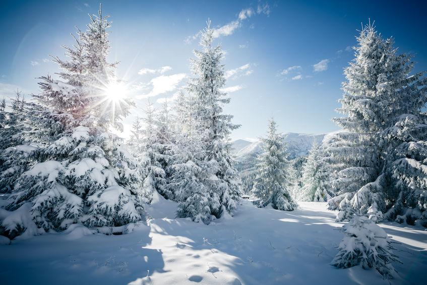 Serene tree, snow & sun
