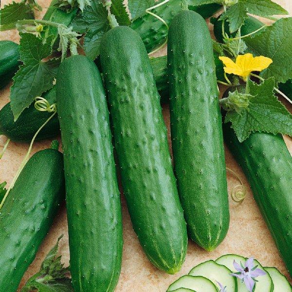 Crisp Cucumber