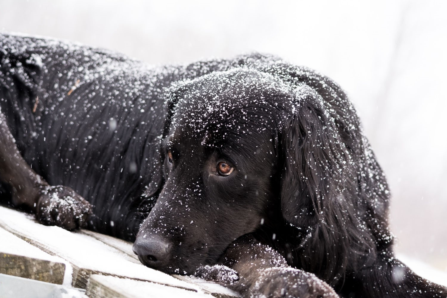 pet first aid in winter