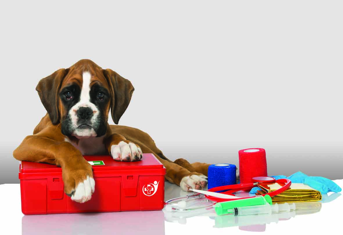Dog on a first aid kit